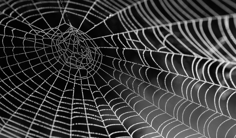spider-web-with-water-beads-network-dewdrop